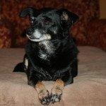 Diva Dog: I Love Lucy!