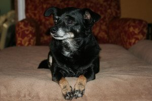IMG_3738-300x200 Diva Dog: I Love Lucy!