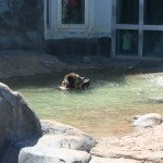 A Day to Bear from the #TulsaZoo
