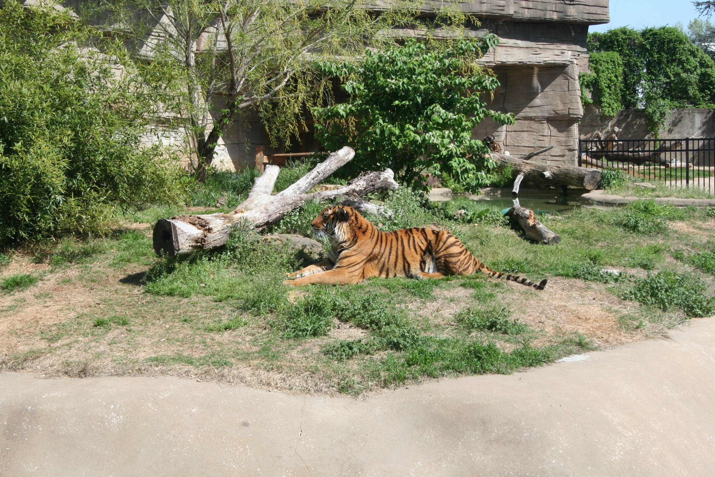 #TulsaZoo: Tiger, Seals & a Gator