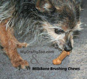 IMG_5449-300x200 MilkBone Brushing Chews Review