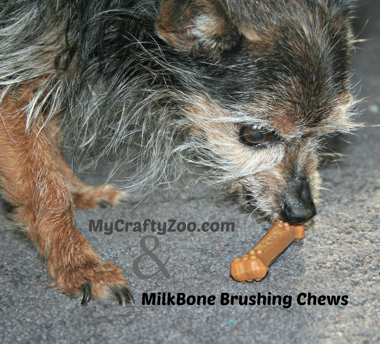MilkBone Brushing Chews Review
