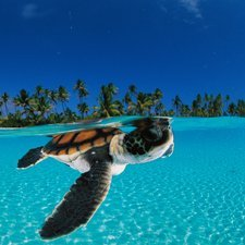 baby-green-sea-turtle