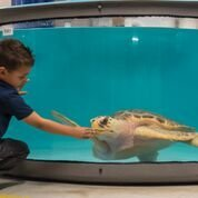 Sea Turtle Recovery at South Carolina Aquarium in Charleston! Great Home-school Adventure!